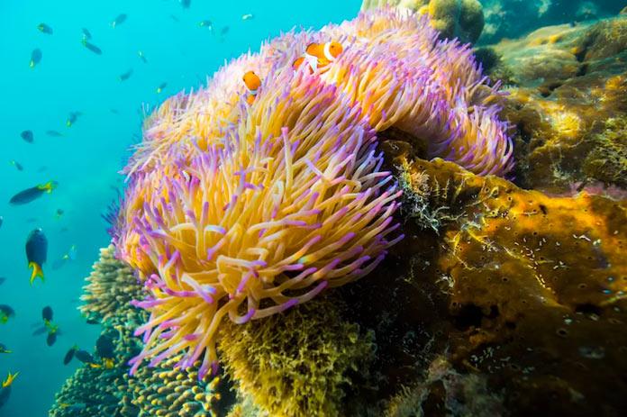 Большой барьерный риф у побережья Австралии