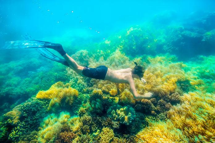 Дайвер на Большом барьерном рифе