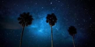 Пальмы на фоне Млечного пути