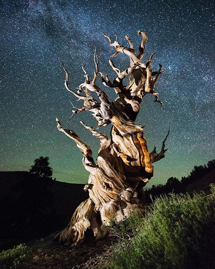 Сухое дерево на фоне звездного неба