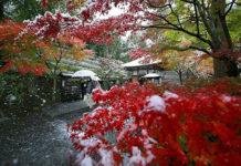Токио сити, первый снег, ноябрь 2016