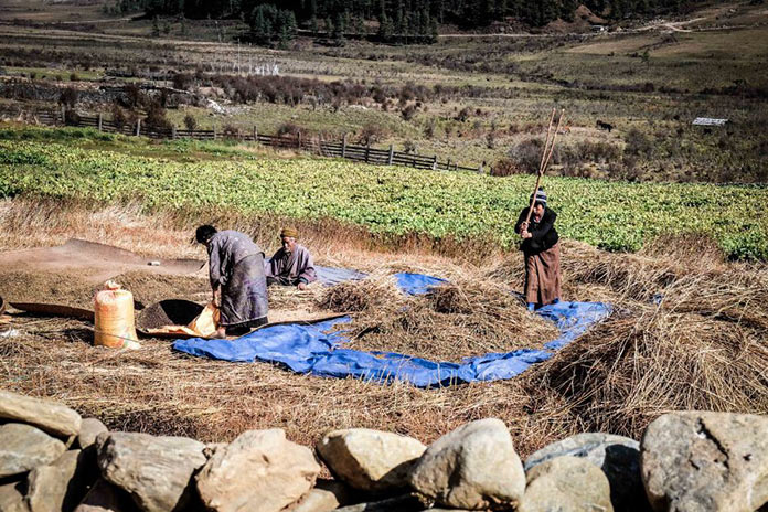 Сельское хозяйство. Этническая жизнь в Бутане. Bhutan Life