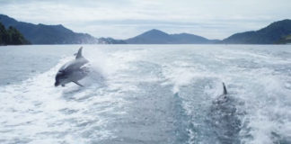 Bottlenose Dolphins Slo-Mo Video