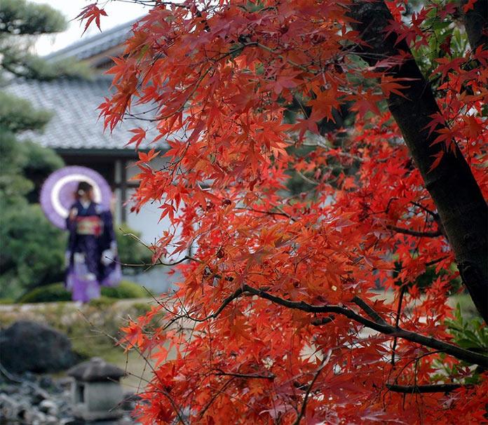 Сады Коко-эн на территории замка Химедзи, Япония