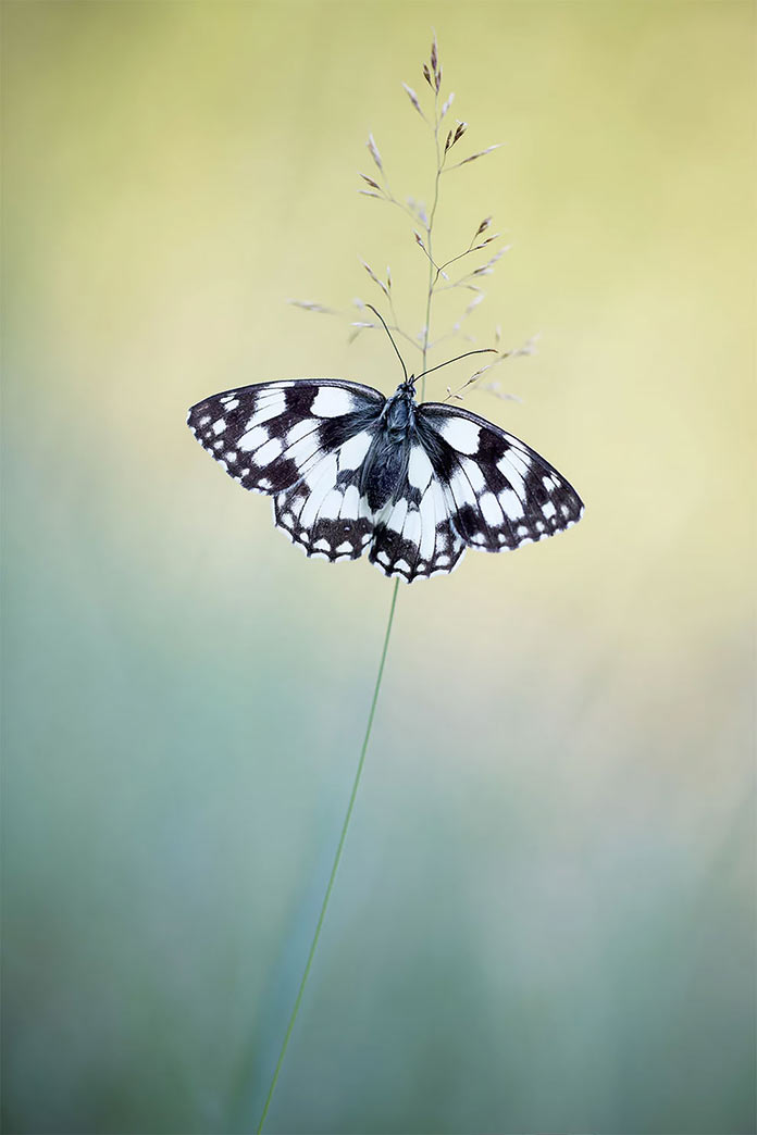 Бабочка в Ла Бренне, макро-фото