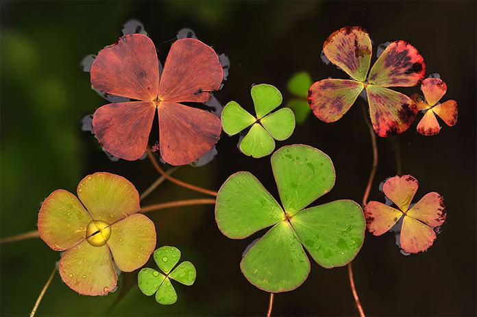 Времена года на воде, растения в воде, макро-фото