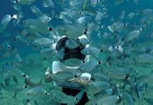 Подводное фото экскурсии в подводном парке Пунат в Хорватии