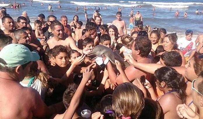 На испанском пляжи отдыхающие до смерти замучили дельфина