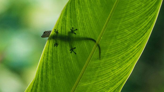 Геккон, Сейшельские острова. Фотографии-победители читательского фотоконкурса The Guardian, январь 2018