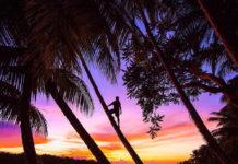 Человек на пальме силуэт Путешествия фото