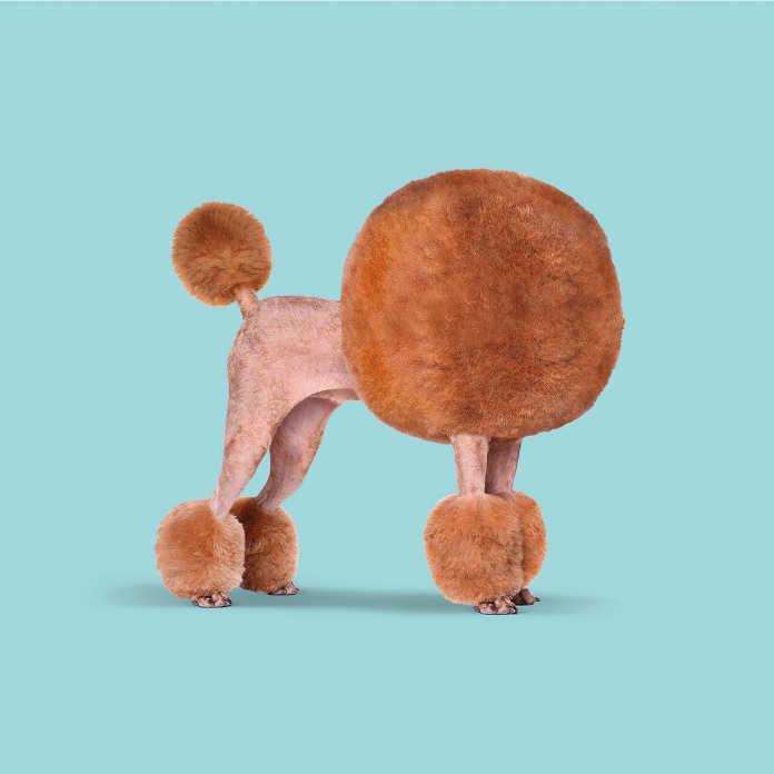 Странные стандарты красоты. Собачий парикмахер. Иллюстрация Хосе Наварро