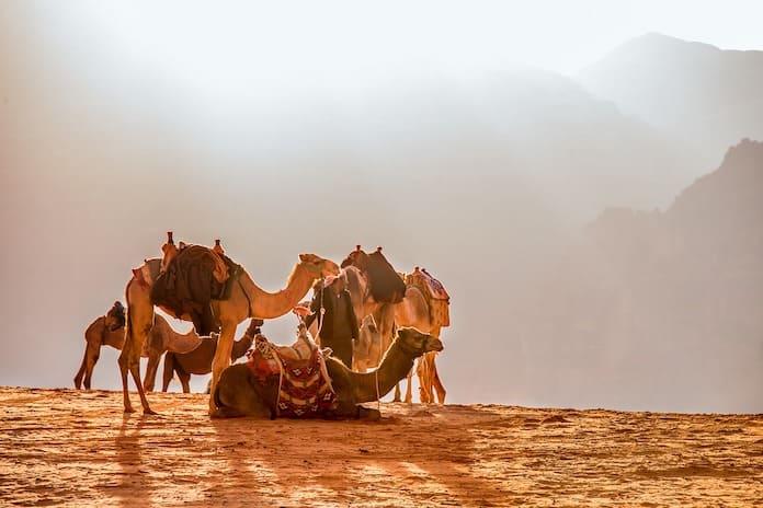 Иордания, верблюды