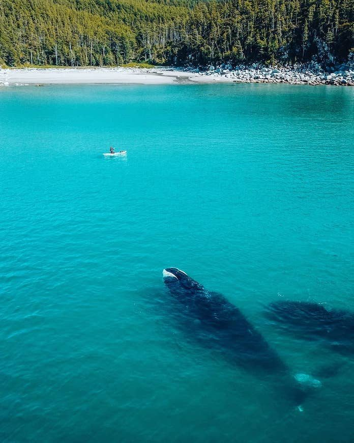 Хабаровский сапсёрфер встретился в море с китом